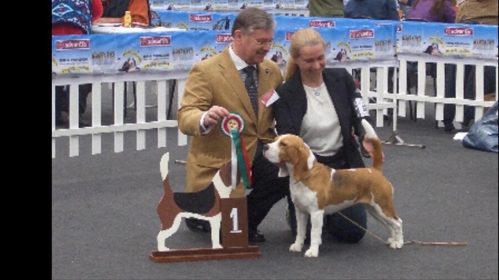 Beagle sul ring con Paola Nuciari
